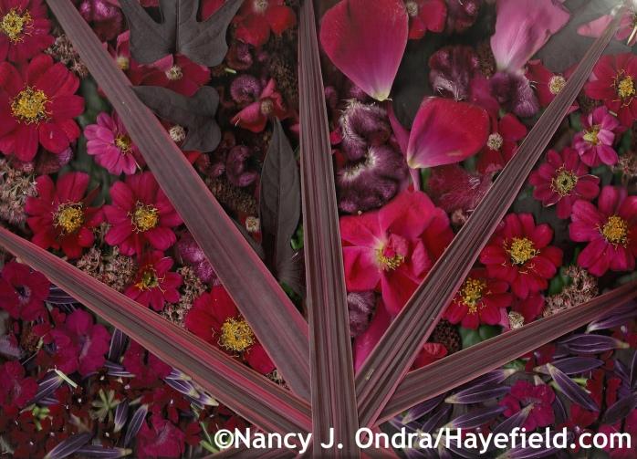 Autumn Pinks at Hayefield.com