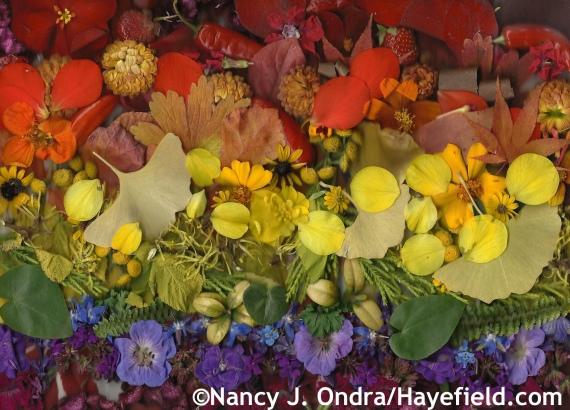 Autumn rainbow at Hayefield.com
