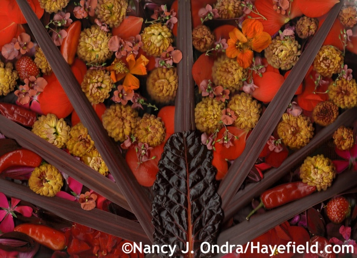 Autumn Reds and Oranges at Hayefield.com