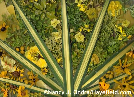 Autumn Yellows at Hayefield.com