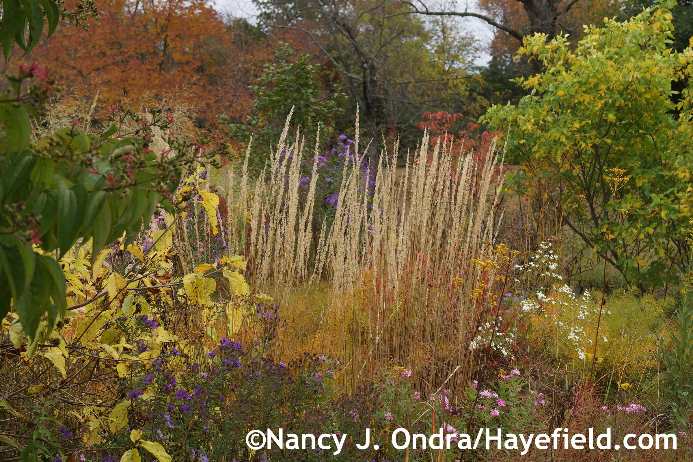 Garden Bloggers\' Bloom Day – October 2014   Hayefield