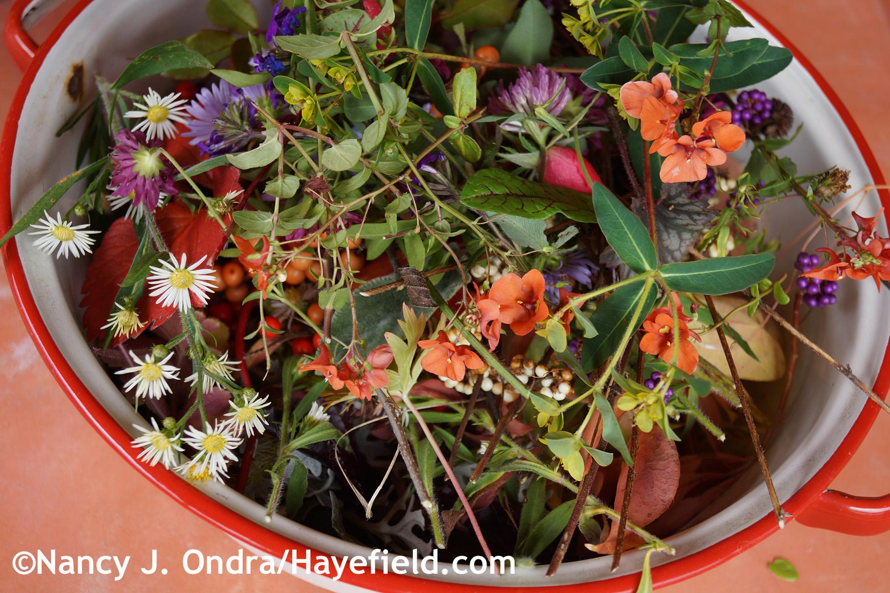 Garden Bloggers' Bloom Day – November 2014 | Hayefield