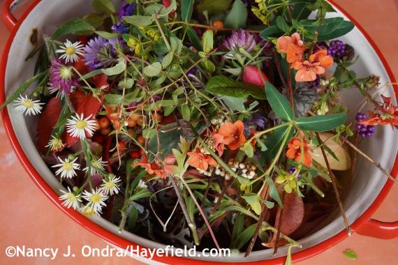 November Blooms at Hayefield.com