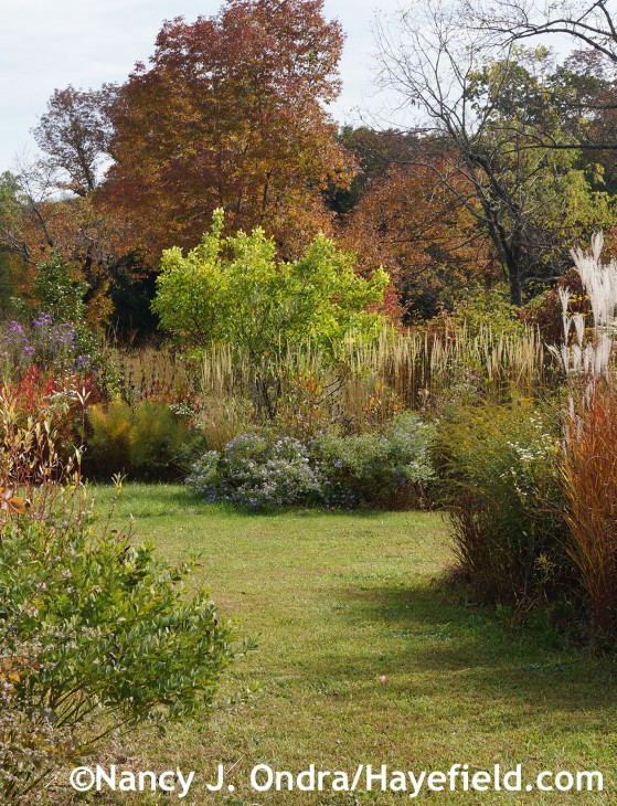 October in The Shrubbery at Hayefield.com