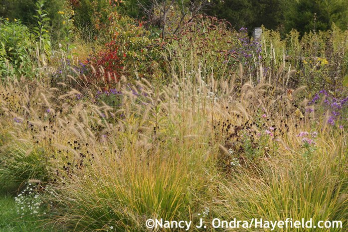 Perennial Meadows at Hayefield.com