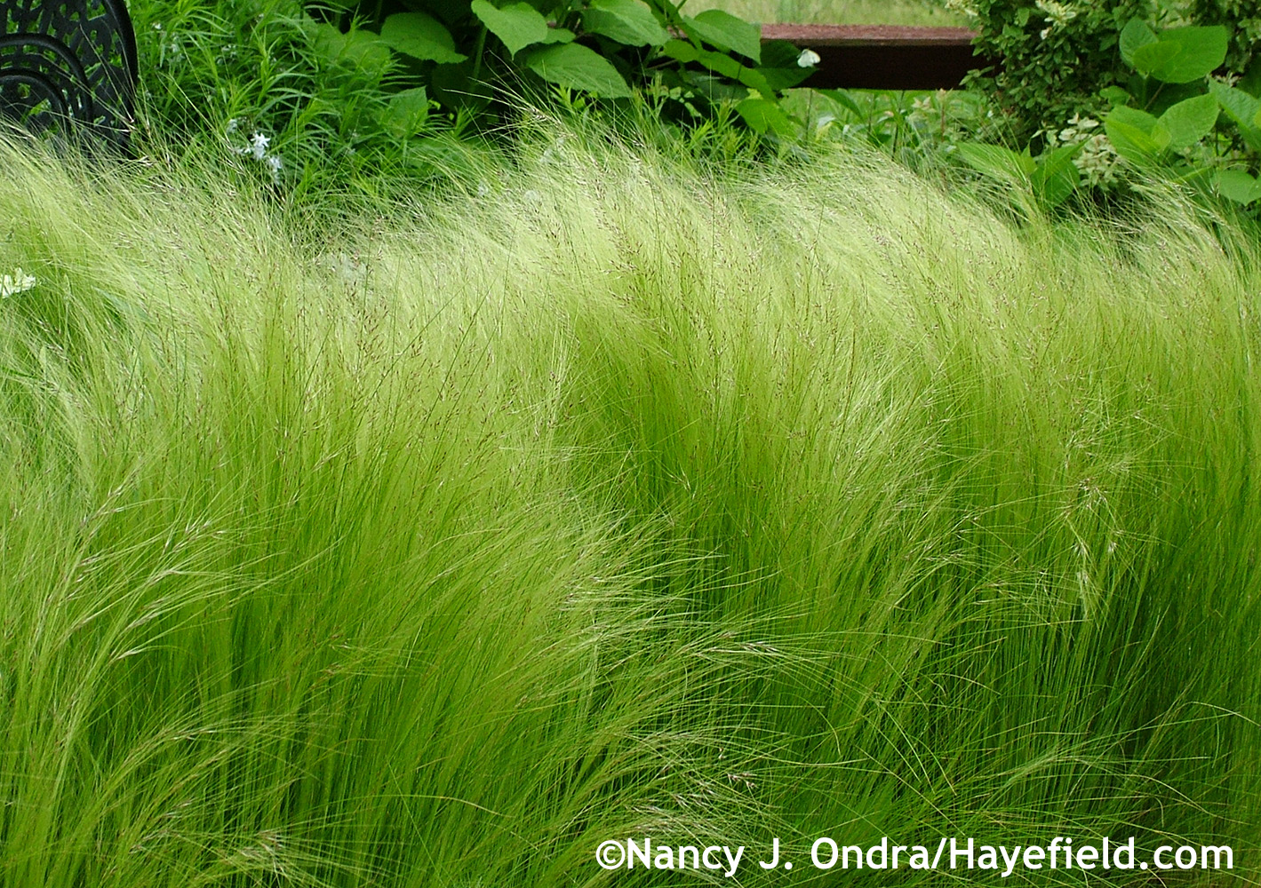 5 plus 1: Please-Touch Plants | Hayefield