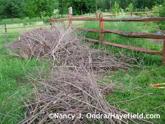Brush pile at Hayefield