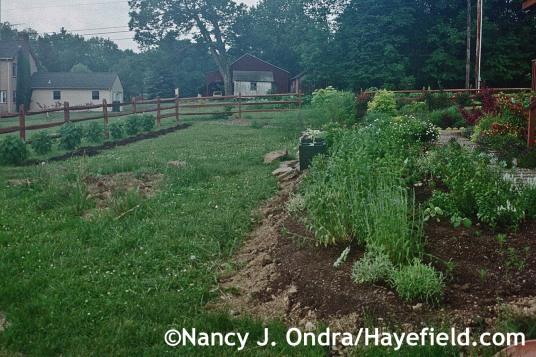 Side Garden June 2004 at Hayefield.com