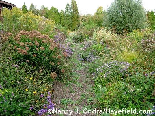 Side Garden October 2009 at Hayefield.com