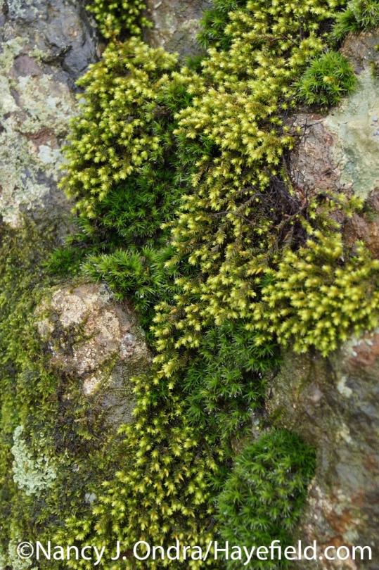 Moss Mosaic - Milford Township, PA