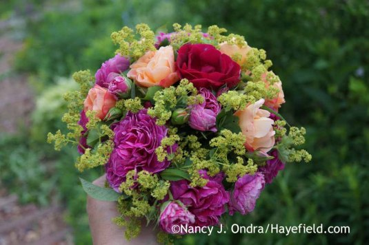 Nosegay of roses and lady's mantle at Hayefield.com