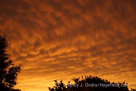 Mammatus Clouds - June 23, 2015; Nancy J. Ondra at Hayefield