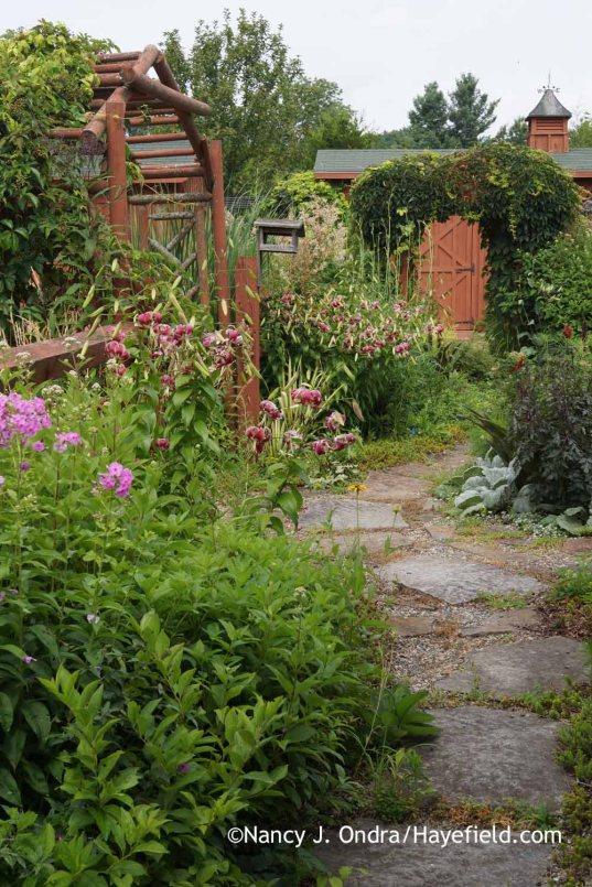 Courtyard path with Lilium Black Beauty; Nancy J. Ondra at Hayefield