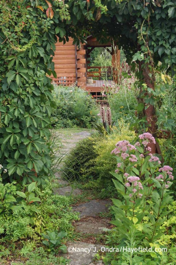 Courtyard Path at Hayefield (mid-August 2015); Nancy J. Ondra