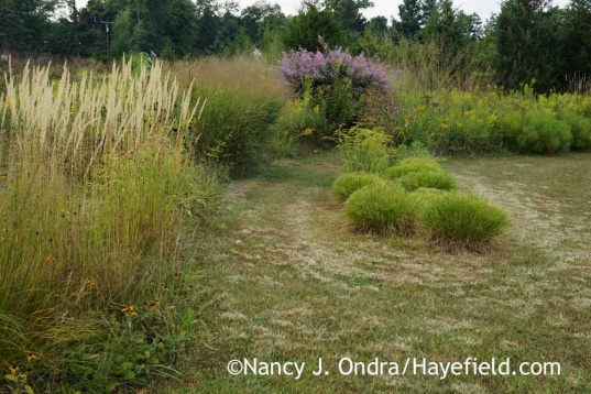 Arc Borders after deadheading the Pennisetum; Nancy J. Ondra at Hayefield