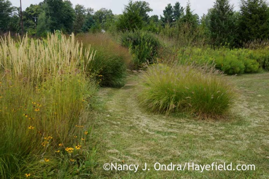 Arc Borders before deadheading Pennisetum; Nancy J. Ondra at Hayefield