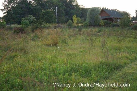 Meadow in September; Nancy J. Ondra at Hayefield