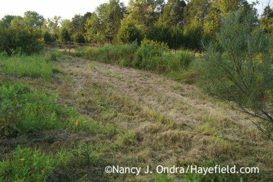 Mowed meadow; Nancy J. Ondra at Hayefield