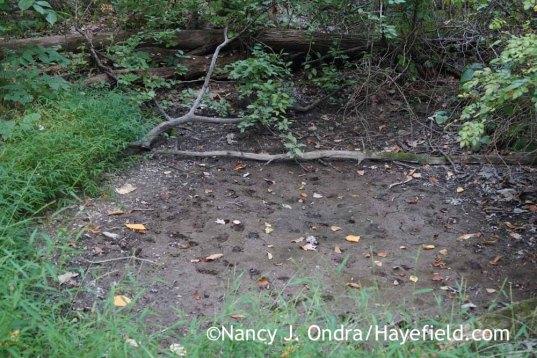 Vernal pool in September (Bucks County, PA); Nancy J. Ondra