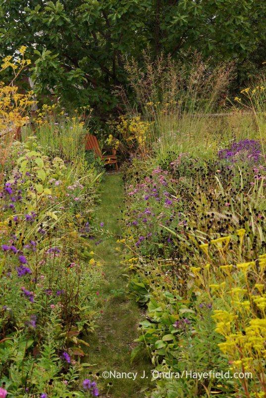 Grass path in side garden; Nancy J. Ondra at Hayefield