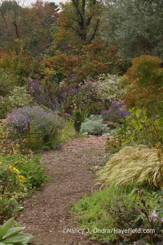 Back Garden Path; Nancy J. Ondra at Hayefield