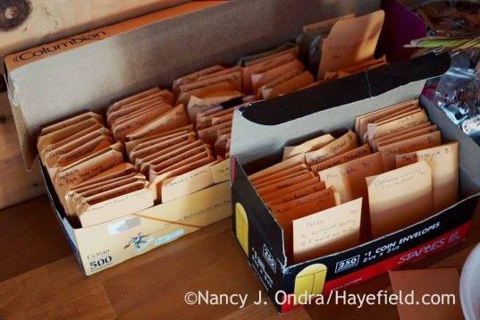 Cleaned seeds; Nancy J. Ondra at Hayefield