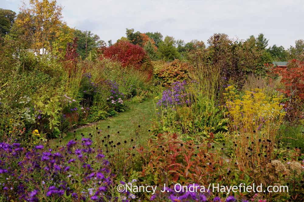 front garden in october nancy j ondra at hayefield
