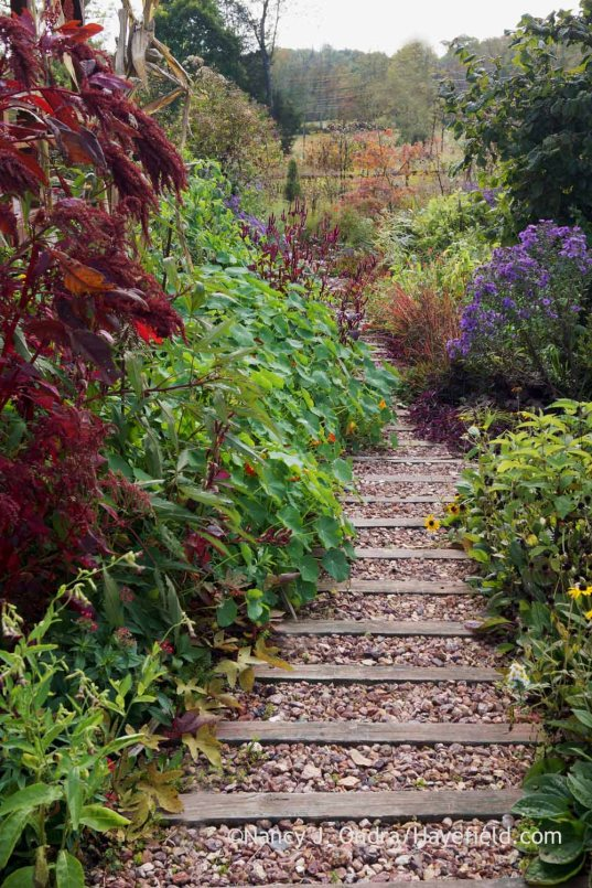 Front Path in October; Nancy J. Ondra at Hayefield