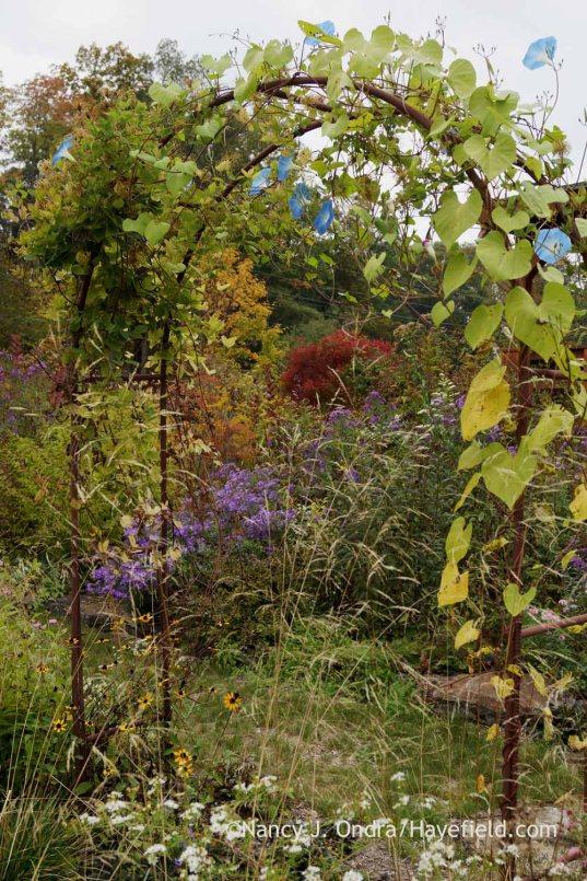 Side garden arbor in mid-October; Nancy J. Ondra at Hayefield