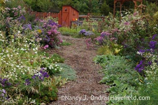Side garden bark path; Nancy J. Ondra at Hayefield