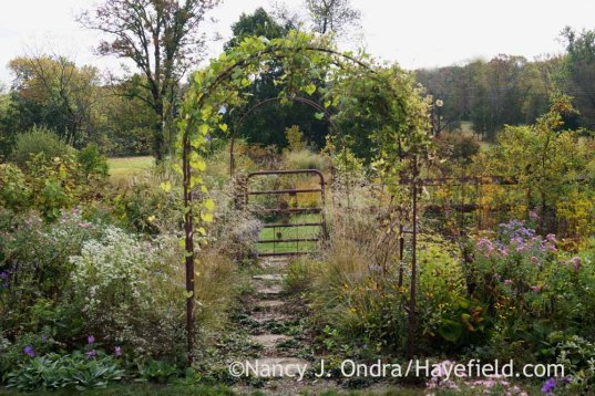 Side garden log-round path; Nancy J. Ondra at Hayefield