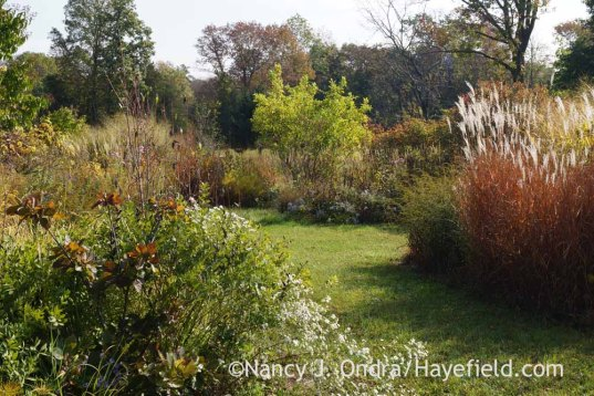 The Shrubbery in mid-October; Nancy J. Ondra at Hayefield