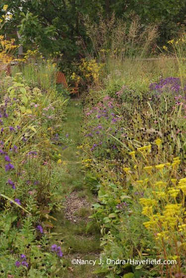 Aster Path October 2015; Nancy J. Ondra at Hayefield
