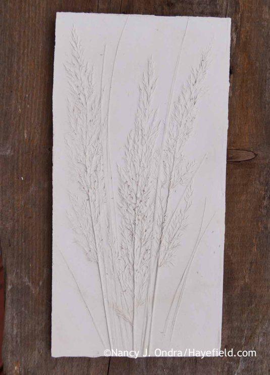 Calamagrostis brachytricha Plaster Tile; Nancy J. Ondra at Hayefield