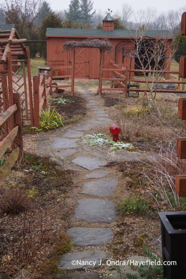 Courtyard Path from house December 2015; Nancy J. Ondra at Hayefield