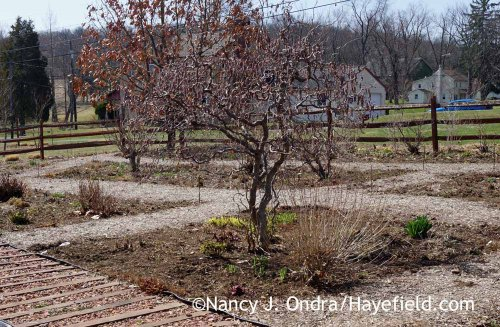Front Garden April 2015; Nancy J. Ondra at Hayefield
