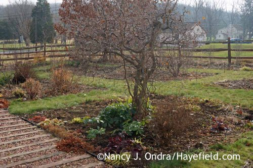 Front Garden December 2015; Nancy J. Ondra at Hayefield