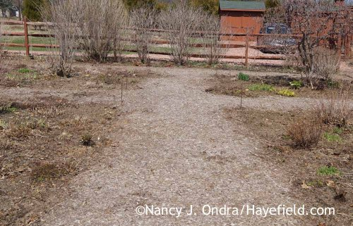 Front Garden Middle Path April 2015; Nancy J. Ondra at Hayefield
