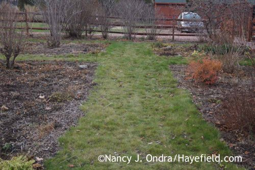 Front Garden Middle Path December 2015; Nancy J. Ondra at Hayefield