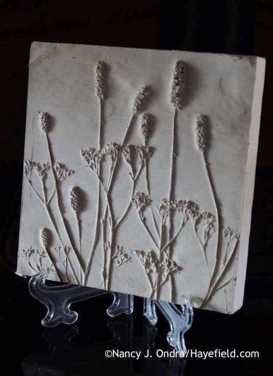 Patrinia scabiosifolia and Sanguisorba Plaster Tile; Nancy J. Ondra at Hayefield