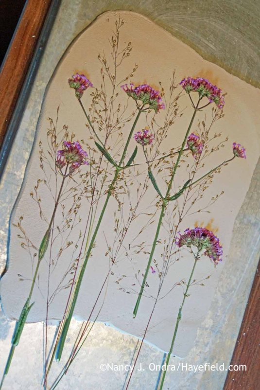 Pressing Verbena and Sporobolus into Clay; Nancy J. Ondra at Hayefield