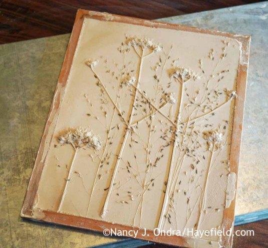 Verbena bonariensis and Sporobolus heterolepis Plaster Tile; Nancy J. Ondra at Hayefield