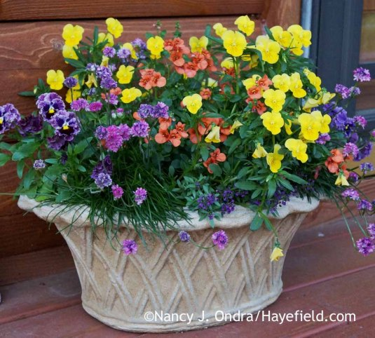 If you think you might need to bring your spring things inside at some point, I suggest choosing a lightweight container--ideally, one with handles. I loved the look of this cement basket planter, but carrying it around was quite a workout. [Nancy J. Ondra at Hayefield]