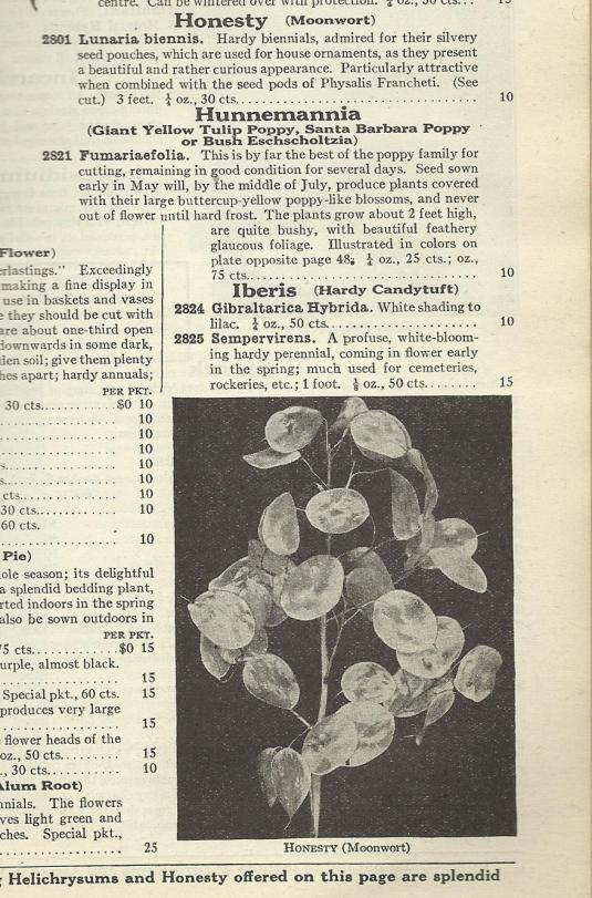 Honesty/Lunaria entry from Dreer's Garden Book 1933 (Henry A. Dreer, 1306 Spring Garden St. Philadelphia, PA.)
