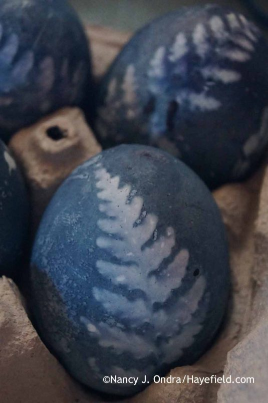 Dyeing Eggs with Botanical Prints; Nancy J. Ondra at Hayefield