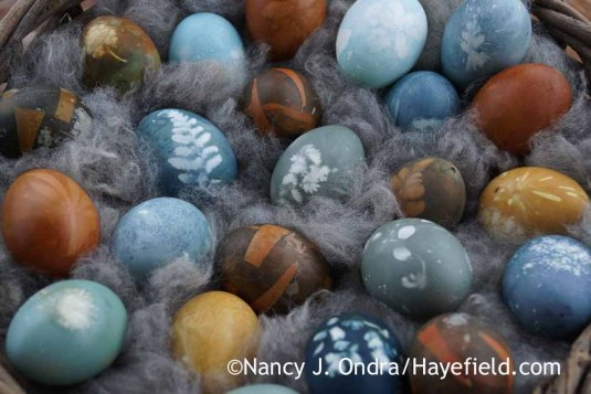 Coloring Eggs with Natural Dyes; Nancy J. Ondra at Hayefield