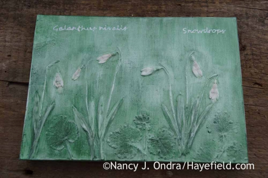 Galanthus nivalis Botanical Impression Tile; Nancy J. Ondra at Hayefield