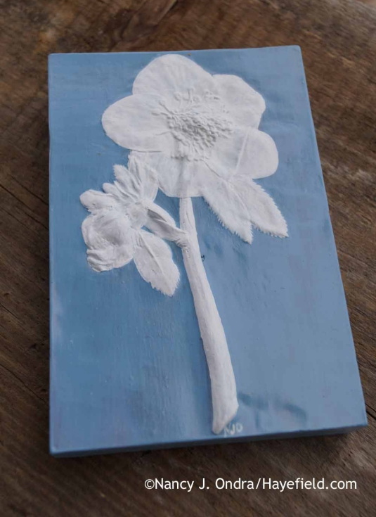 Helleborus x hybridus Botanical Impression Tile; Nancy J. Ondra at Hayefield Ondra