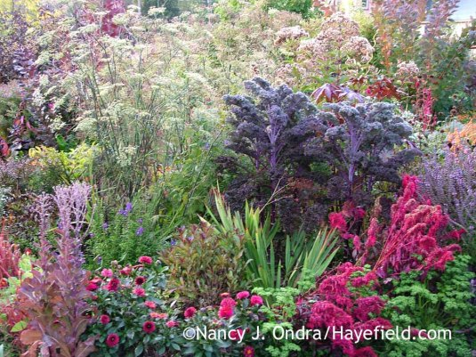 'Redbor' kale with bronze fennel (Foeniculum vulgare 'Purpureum'), 'Redina' lettuce', 'Gallery Singer' dahlia, and 'Wine Sparkler' celosia [October 8, 2008]; Nancy J. Ondra at Hayefield