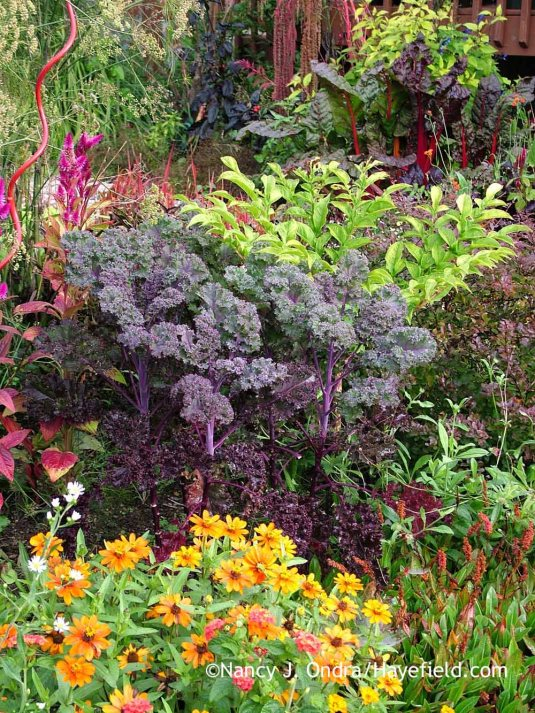 'Redbor' kale with 'Profusion Orange' zinnia, and Amorphophallus konjac [October 4, 2008]; Nancy J. Ondra at Hayefield